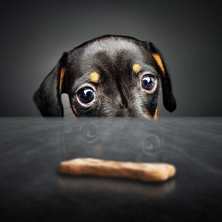 dog and treat