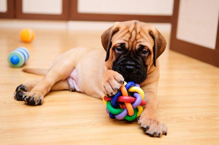 Dog Toy for Training