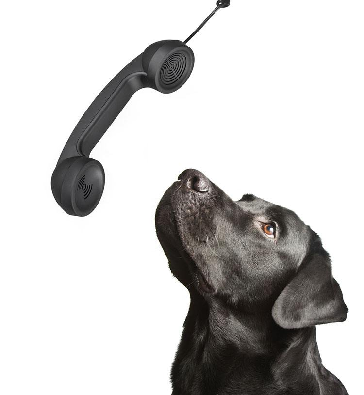 dog speak to phone