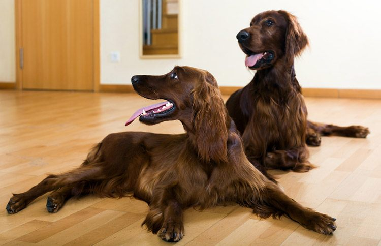 Keep Dogs in Silent Room to Teach them to Stay