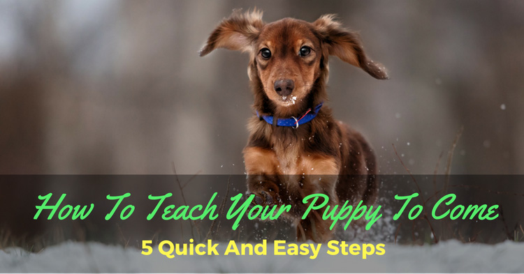 How To Teach Your Puppy To Come: 5 Quick And Easy Steps