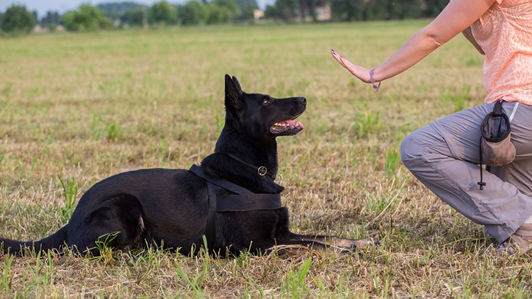Teach Dog in Different Area