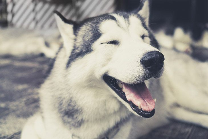 Dog Laugh