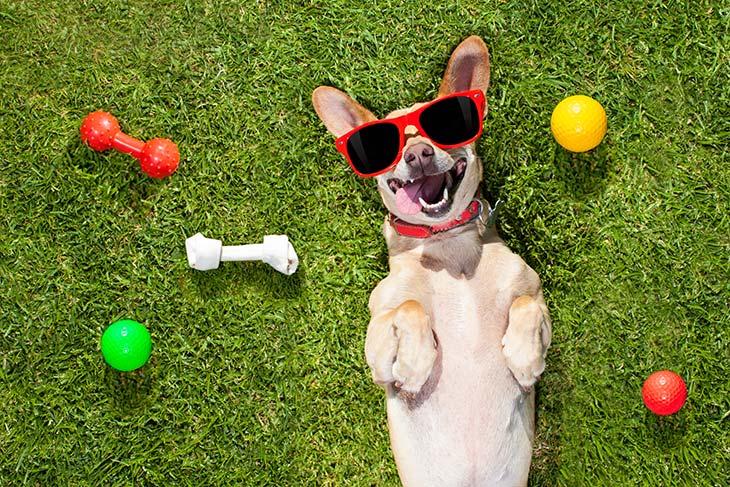 Make Dog Smile By Toys
