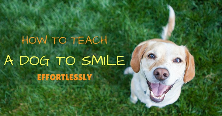 Teach A Dog To Smile