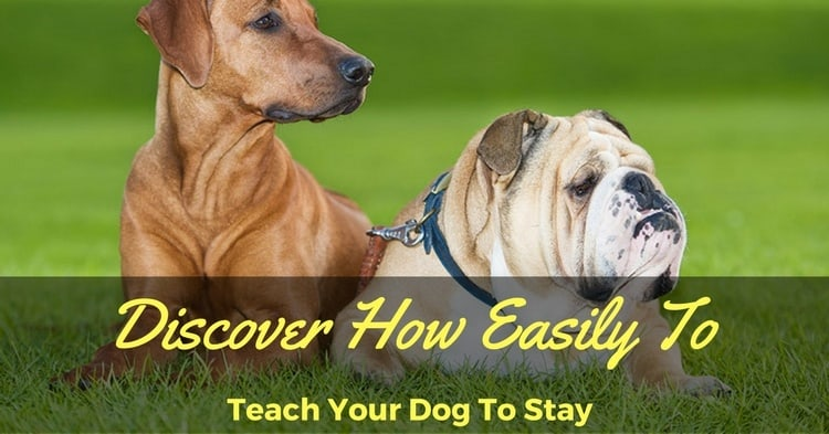 Teach a Dog to Stay