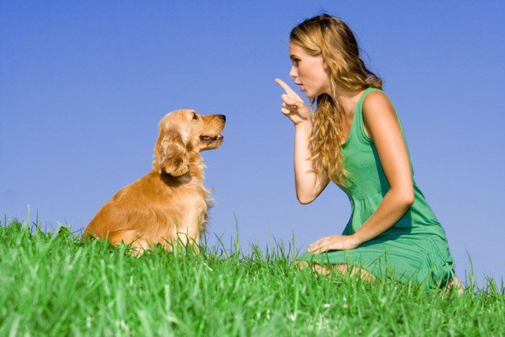 Get Dog's Attention When Teaching Him To Sit