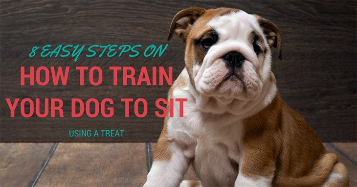 How To Train Your Dog To Sit