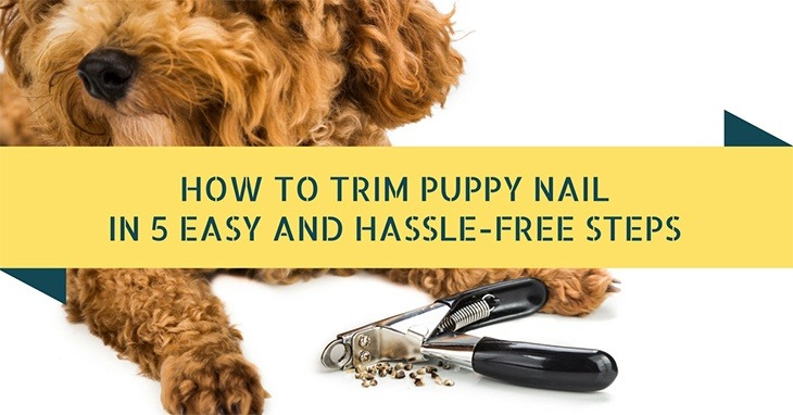 Trim Puppy Nails
