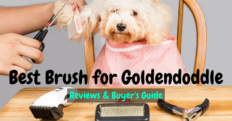 Best Brush for Goldendoodle 2018 – Reviews & Buyer's Guide