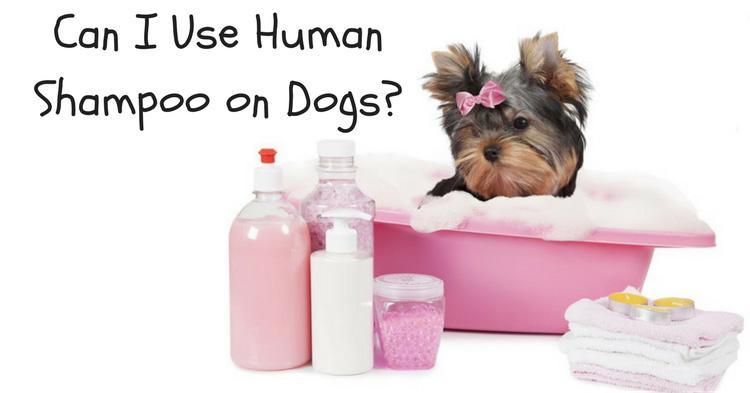 can I use human shampoo on dogs