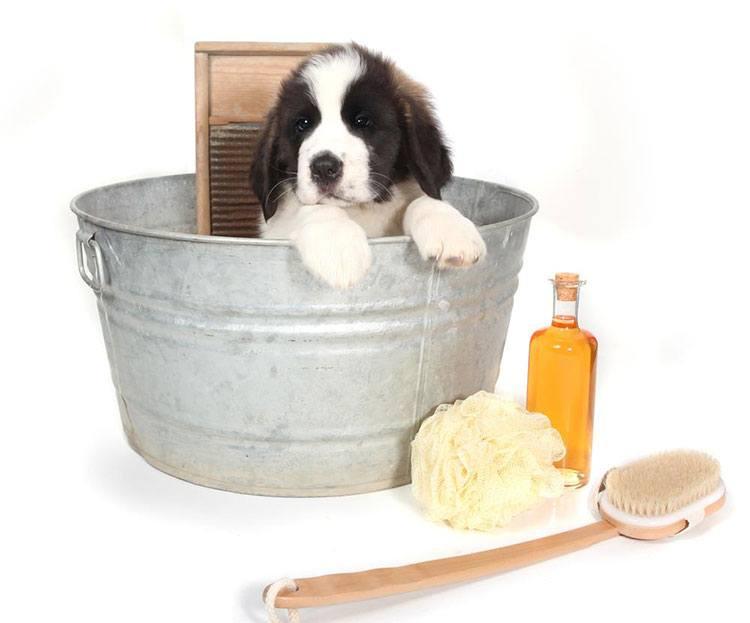 should i bathe dog everday