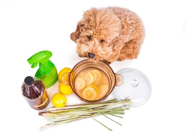 Dog Shampoo Ingredients