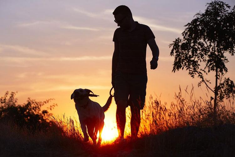 Dog Heel with Man in Nature