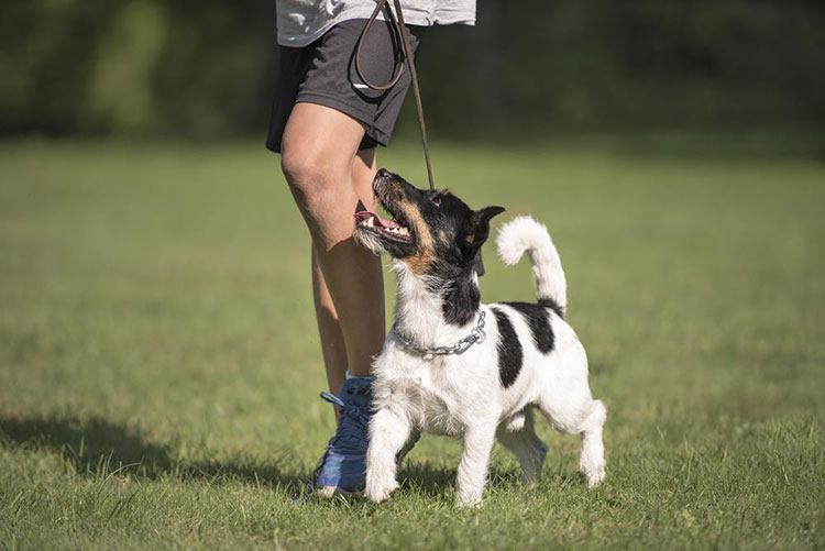Prepare your Dog for a Walk