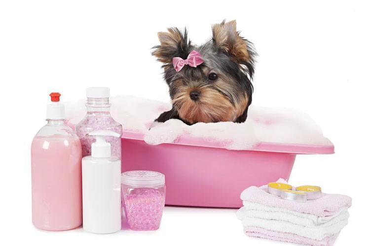 bathe a dog