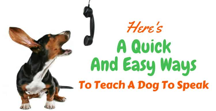 teach a dog to speak