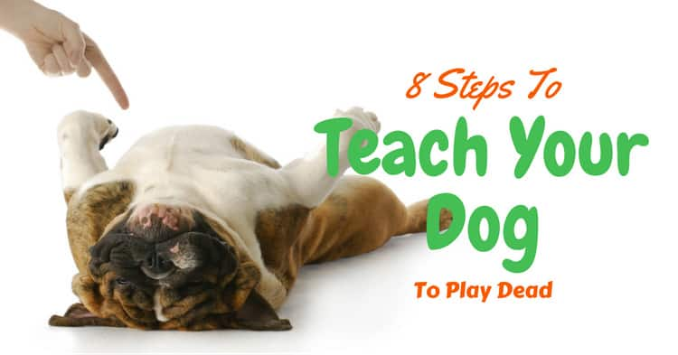 8 Steps To Teach Your Dog To Play Dead