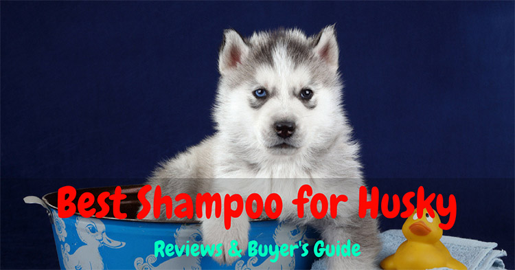 Best Shampoo for Husky 2018 – Reviews & Buyer's Guide