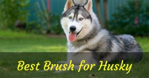 best brush for husky