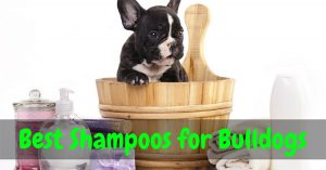 best shampoo for bulldogs