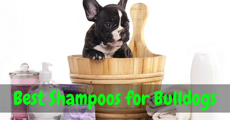 Best Shampoo for Bulldogs 2018 – Reviews & Buyer's Guide