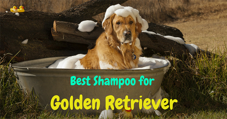 5 Shampoos to Help your Retriever Stay Golden