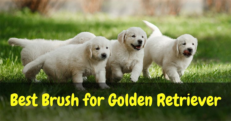 Best Brush for Golden Retriever 2018: The Best Golden Retriever Brush Your Dog Will Surely Love
