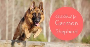 best brush for german shepherd dog