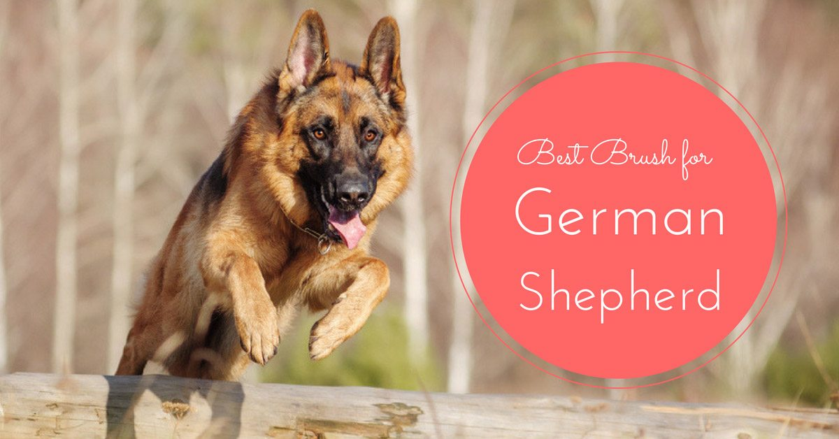 Best Brush for German Shepherd 2018 – How We Picked