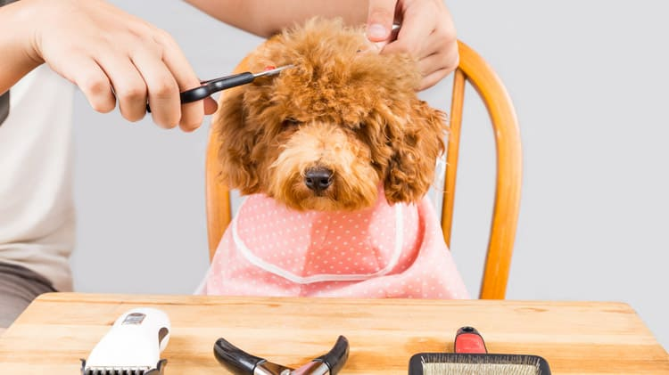 how to choose a brush for dog