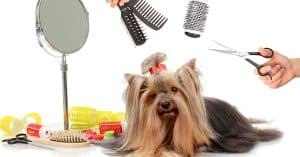 best brush for long hair dog