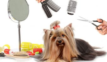 Best Brush for Long Hair Dog 2018 – How did We Pick?