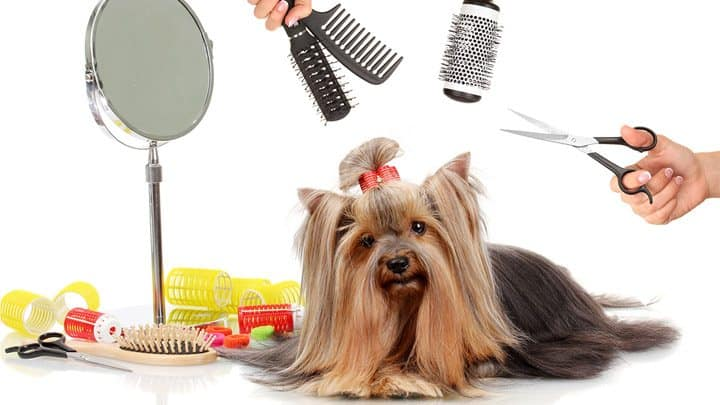 consider when shaving your matted dog