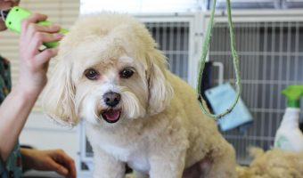 How to Groom a Dog with Long Hair – The Right Way