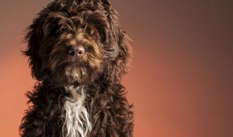 Learn the Right Way on How to Shave a Matted Dog