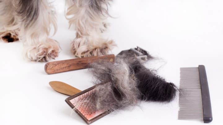 long hair dog grooming tools
