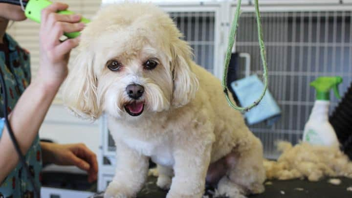 shave matted dog process