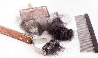 Best Dog Brush for Shedding 2018: The Best deShedding Tool