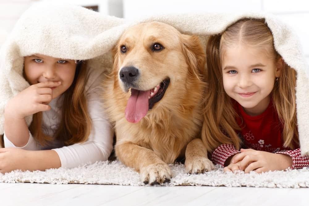 Dogs Strengthen Bonds Between Families
