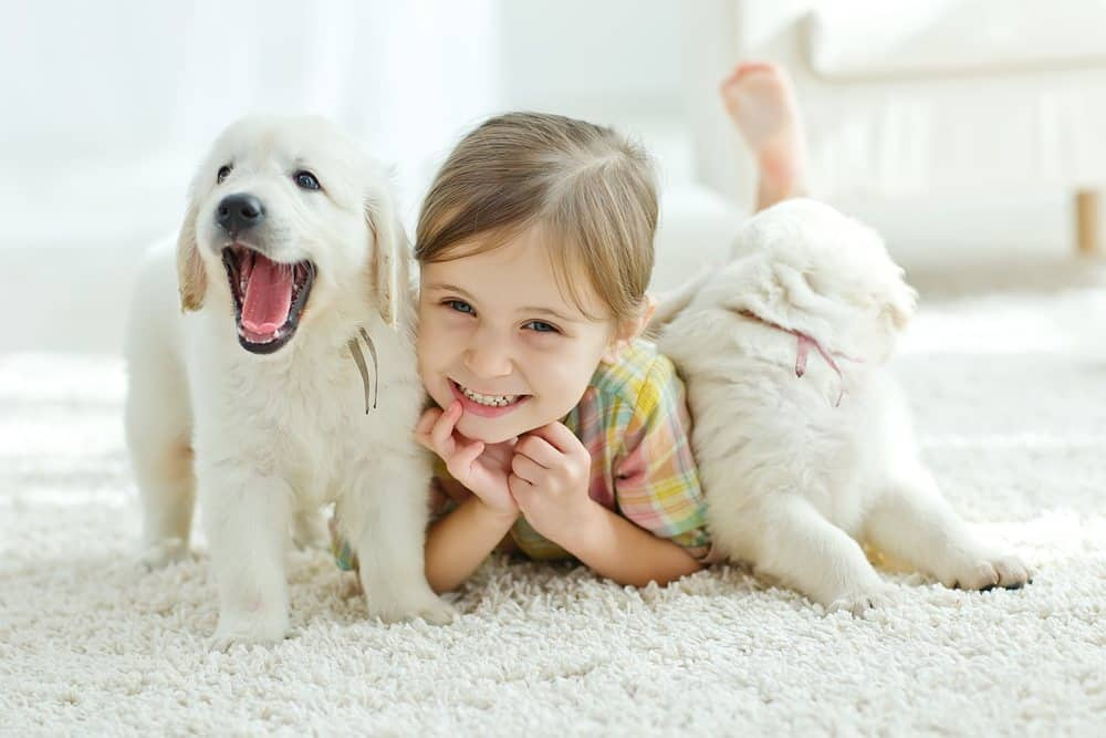 dog help improve kid's social skill
