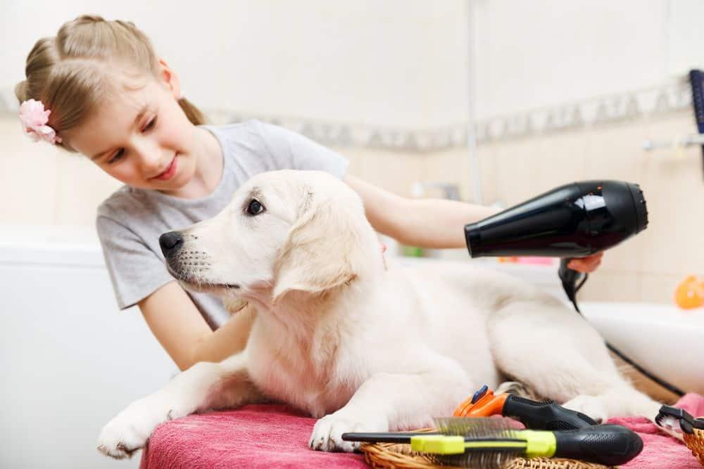 kid brush dog