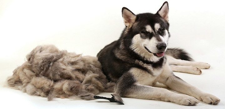 what causes matted hair
