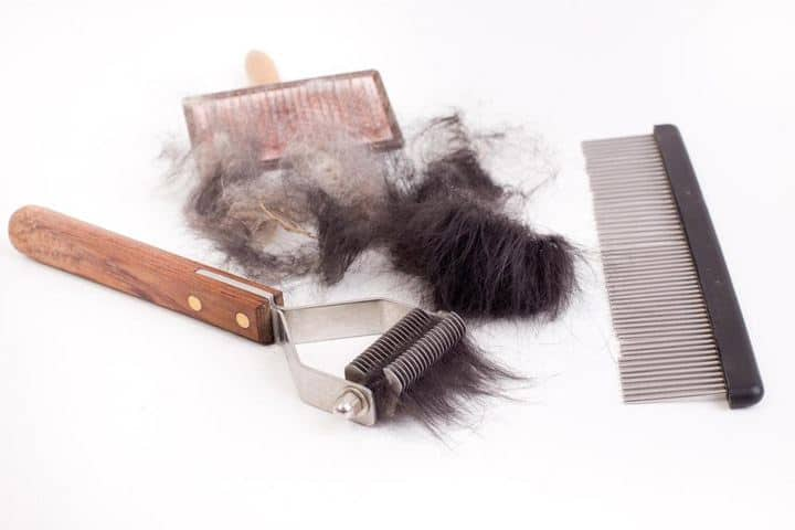 dog brush tools