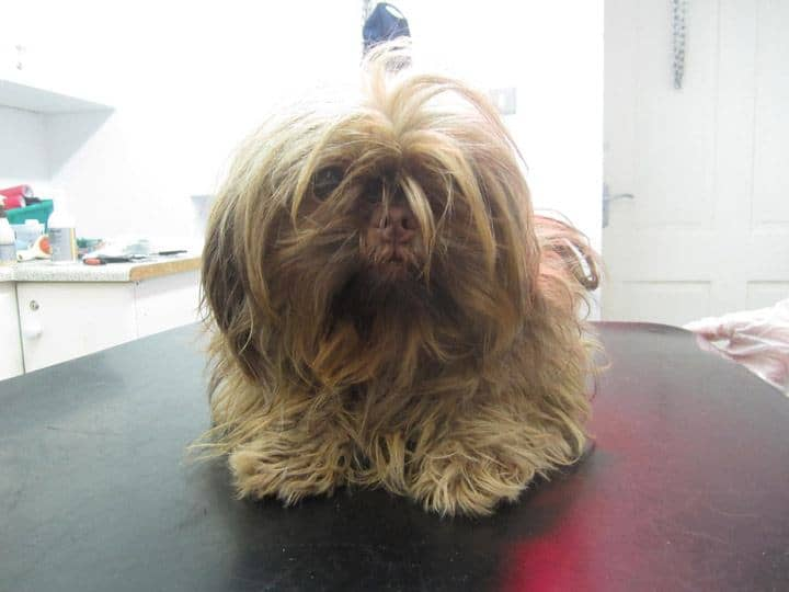 matted dog hair problems