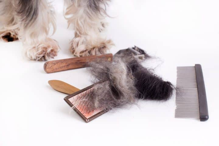 remove matted dog hair