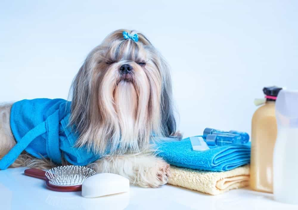 Best shampoo for Shih Tzu