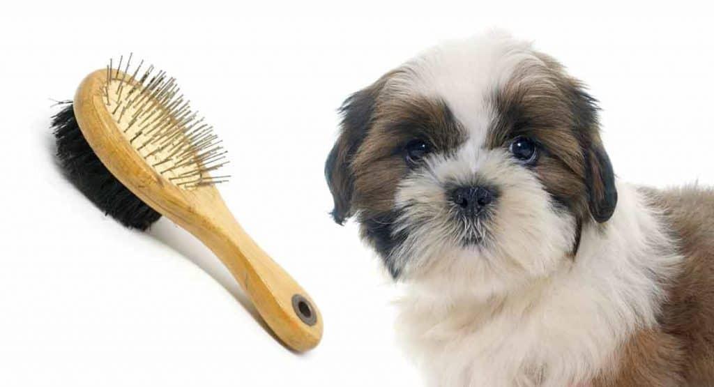 Best brush for long hair Shih Tzu
