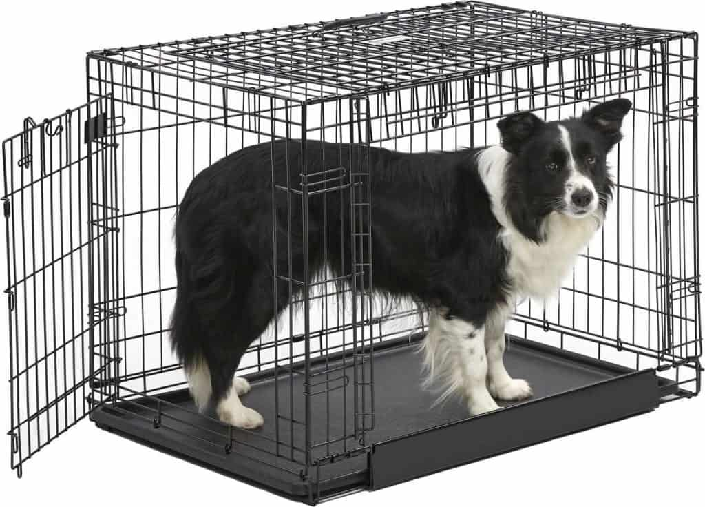 Border Collie in a dog crate